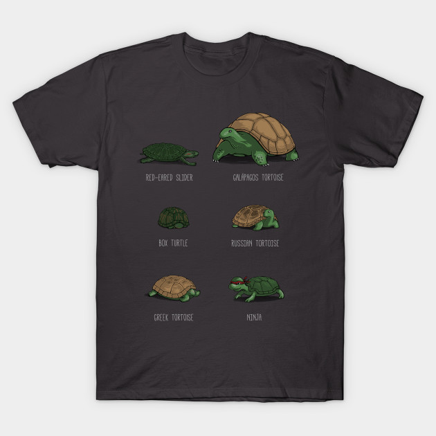 Know Your Turtles